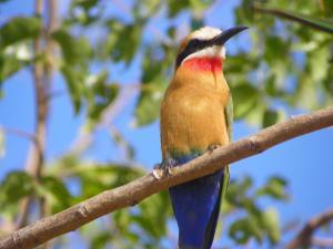 Pestana Kruger Lodge (40 of 47)
