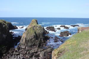 Emerald Dolphin Inn & Mini Golf, Hotels  Fort Bragg - big - 16