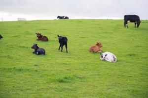 Huntlands Farm Bed & Breakfast (28 of 28)