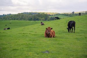 Huntlands Farm Bed & Breakfast (8 of 28)