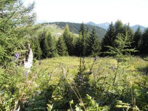 Land Romantik, Nyaralók  Urschendorf - big - 14