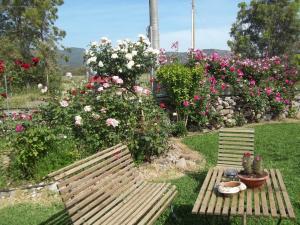 Il Vecchioliveto di Ornella, Bed & Breakfasts  Marrùbiu - big - 4