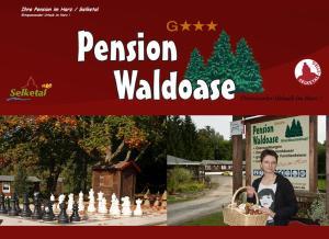 Pension Waldoase Hirschbuchenkopf