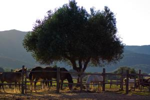 Tenuta Agricola dell'Uccellina, Farm stays  Fonteblanda - big - 119