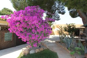 Finca Can Toni, Country houses  Ibiza Town - big - 30
