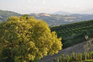 Agriturismo Monte Maggio, Farmy  Lapedona - big - 46