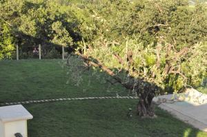 Agriturismo Monte Maggio, Farmy  Lapedona - big - 4