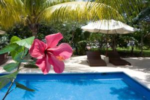 Sotavento Hotel & Yacht Club, Отели  Канкун - big - 37