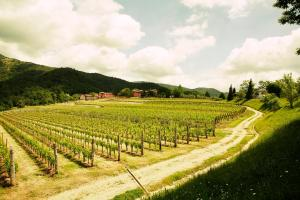 Agriturismo l'Uva e le Stelle, Farm stays  Faedis - big - 29
