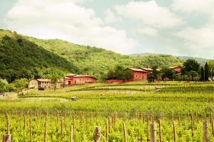 Agriturismo l'Uva e le Stelle, Farm stays  Faedis - big - 25