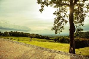 Agriturismo l'Uva e le Stelle, Farm stays  Faedis - big - 23