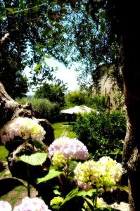 Locanda Delle Mura Anna De Croy, Bed and breakfasts  Magliano in Toscana - big - 20