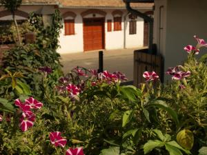 Vitényi Pince Vendégház, Guest houses  Villány - big - 23