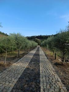 Quinta das Aveleiras, Farmy  Torre de Moncorvo - big - 36