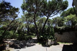 Residence Casa Di Caccia, Apartmanhotelek  Marina di Bibbona - big - 21