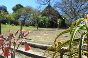 Hut met Uitzicht op de Tuin