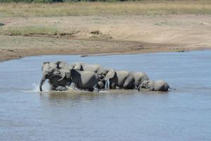 Zikomo Safari