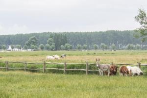 De Rietkant, Dovolenkové domy  Knokke-Heist - big - 10