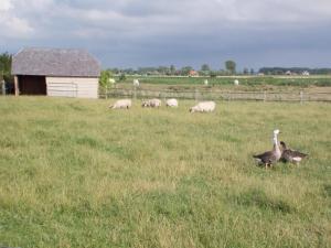 De Rietkant, Dovolenkové domy  Knokke-Heist - big - 9
