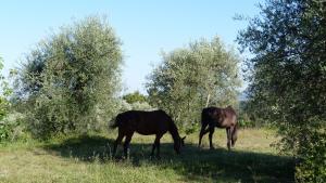 Agriturismo Podere Sottogello, Agriturismi  San Giovanni a Corazzano  - big - 19