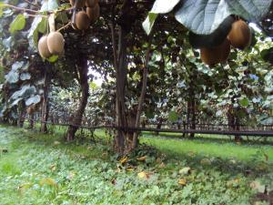Agriturismo Sant' Anna, Farmházak  Treviso - big - 15