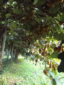 Agriturismo Sant' Anna, Farmházak  Treviso - big - 16