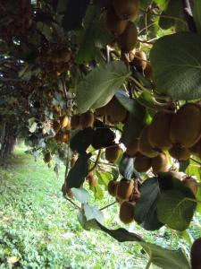 Agriturismo Sant' Anna, Farmházak  Treviso - big - 17