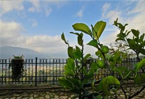 Casa Vacanze Le Muse, Country houses  Pieve Fosciana - big - 49