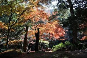 Sakuraya, Szállodák  Mijadzsima - big - 57