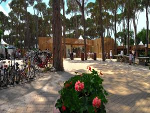 Park Albatros, Holiday parks  San Vincenzo - big - 109