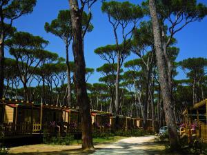 Park Albatros, Holiday parks  San Vincenzo - big - 110
