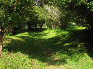 Fazenda Caturama, Prázdninové domy  Areal - big - 35