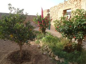 Takad Dream Rural, Homestays  El Borj - big - 15
