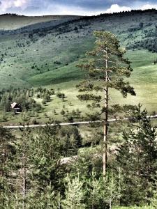 Previja Zlatibor Chalet, Horské chaty  Zlatibor - big - 50