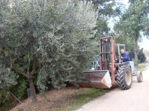 Agriturismo La Marletta, Фермерские дома  Имола - big - 14