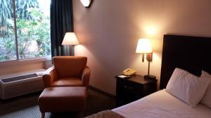 Vista Inn & Suites Tampa, Hotely  Tampa - big - 9