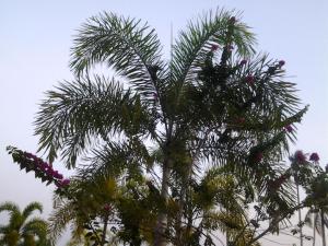 Ocean Garden Langkawi, Case vacanze  Kuah - big - 54