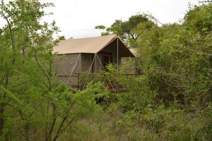 The Wild Olive Tree Camp, Luxusní stany  Manyeleti Game Reserve - big - 8