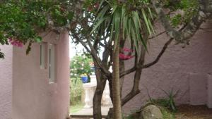 Villa Morosi, Apartments  Favone - big - 35