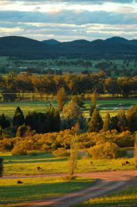 Mudgee Homestead Guesthouse, Homestays  Mudgee - big - 3