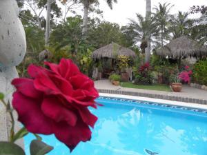 Casa Virgilios B&B, Bed & Breakfast  Nuevo Vallarta  - big - 6