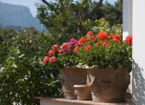 Hotel Villa Brunella, Hotels  Capri - big - 35