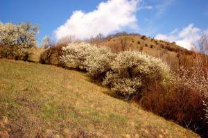 Pensiunea Ambiance, Penzióny  Piatra Neamţ - big - 58