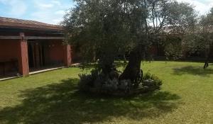 Agriturismo Su Barraccu, Farm stays  Loceri - big - 18