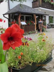 Hilde's Residence, Penzióny  Gura Humorului - big - 1