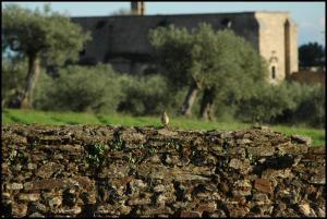 La Higuera Albergue Turístico Rural, Hostels  Garrovillas - big - 17