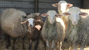 Agriturismo Il Sesto Senso, Farmy  Ladispoli - big - 24