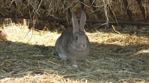 Agriturismo Il Sesto Senso, Farmy  Ladispoli - big - 22