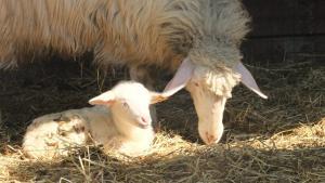 Agriturismo Il Sesto Senso, Farmy  Ladispoli - big - 23