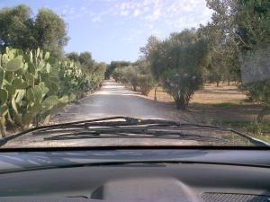 Masseria Asciano, Farm stays  Ostuni - big - 10